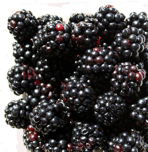 Pick Your Own Blackberry Farms in Western North Carolina