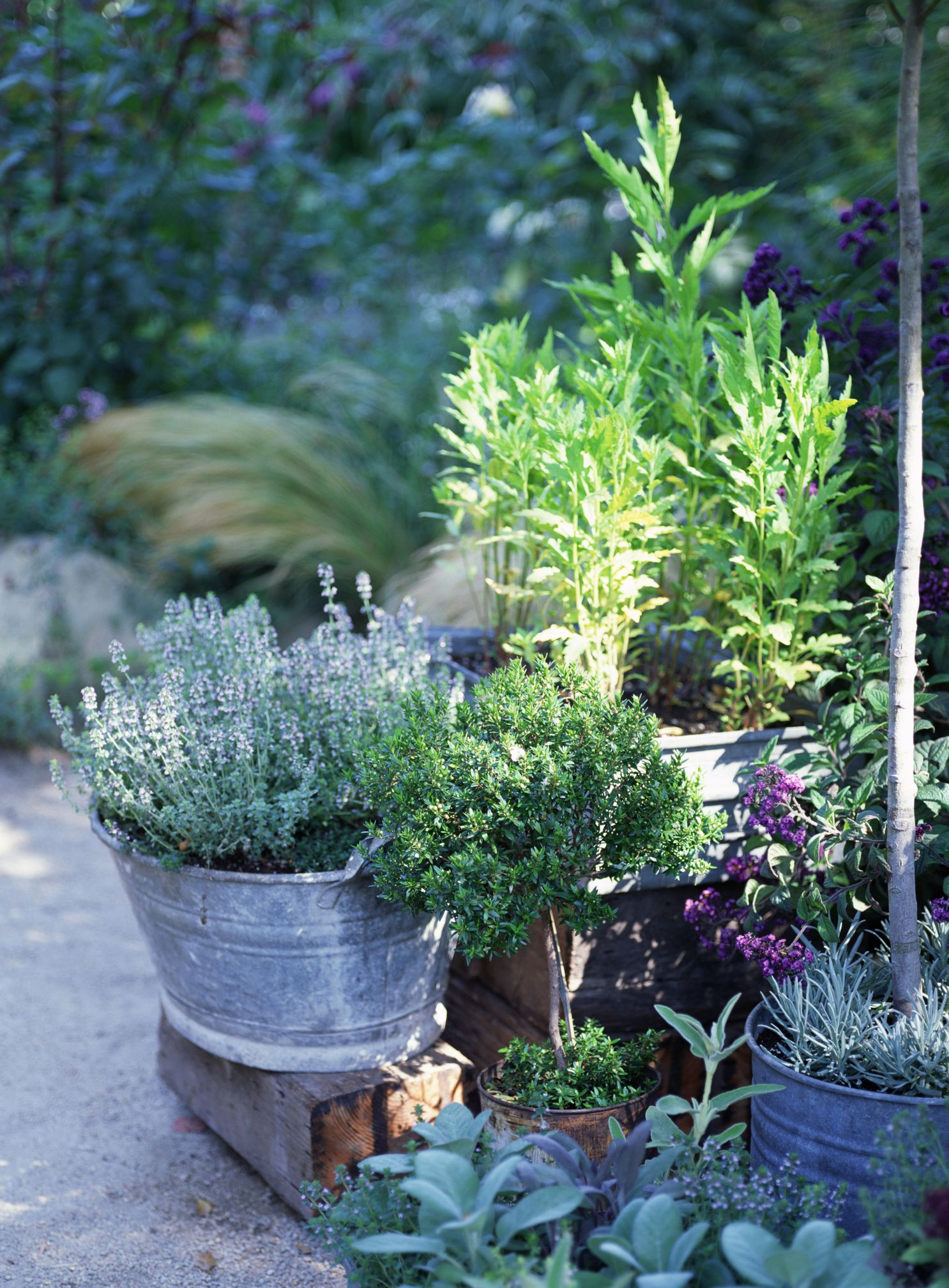 5 Things to Know for Container Garden Success