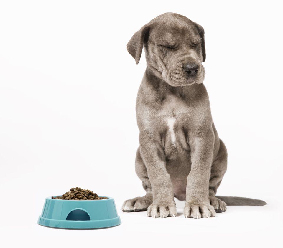 Pup-Hates-FoodResize.jpg