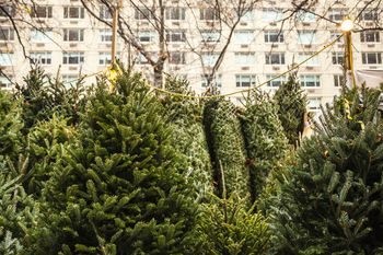 Where to Buy a Christmas Tree in Brooklyn