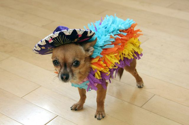 DIY Piñata Dog Costume