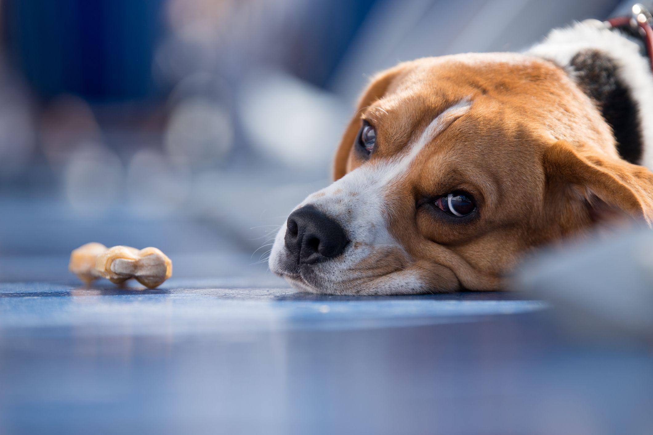 Hepatitis Dog Food