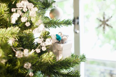 Christmas Tree or Floral Preservative Recipe