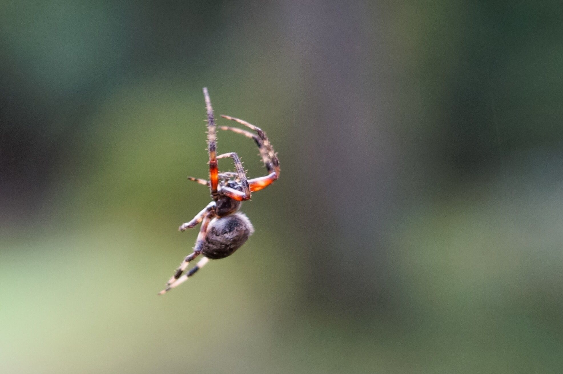 all about the characteristics of a spider