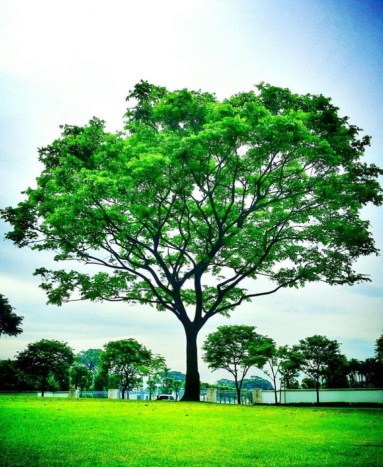 10 tipos de plantas m s comunes for Las caracteristicas de los arboles