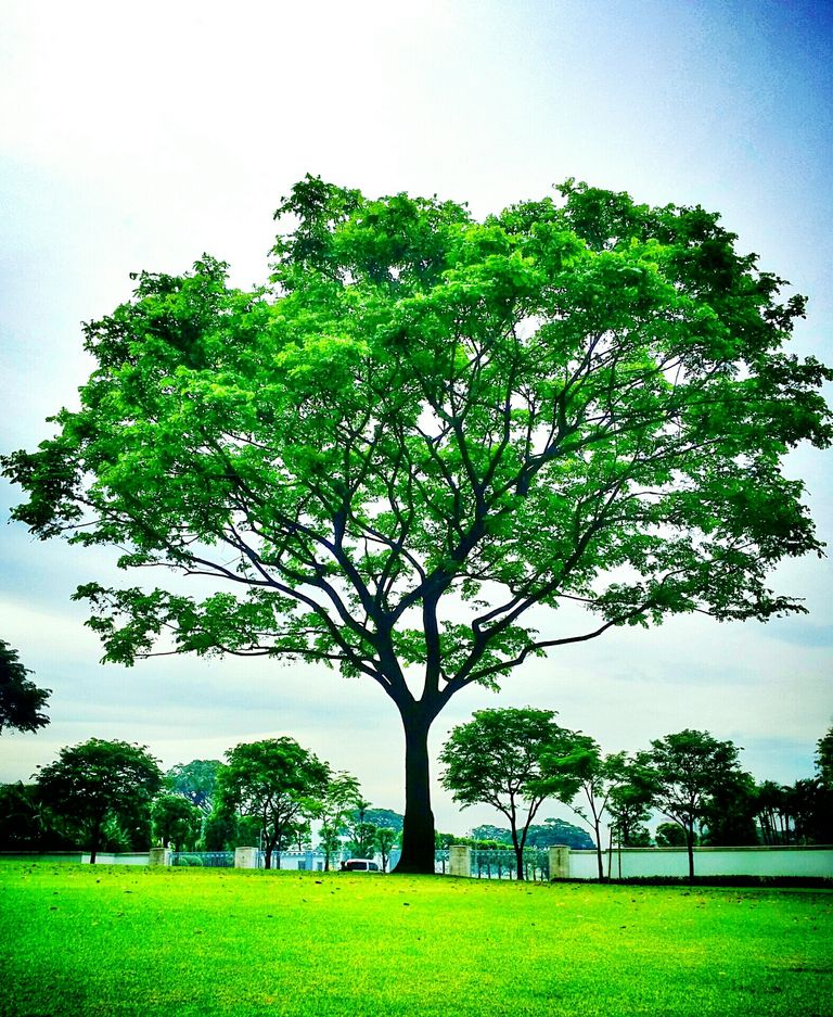 10 tipos de plantas m s comunes for Como criar caracoles de jardin