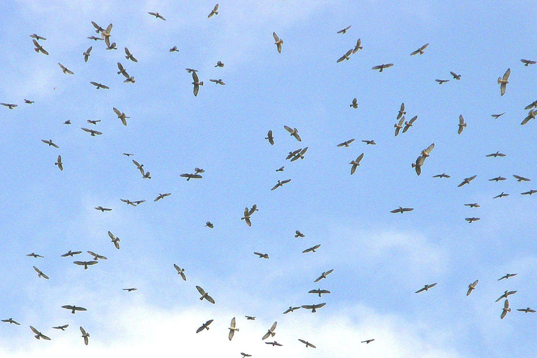 Kettle definition bird flocks buycottarizona