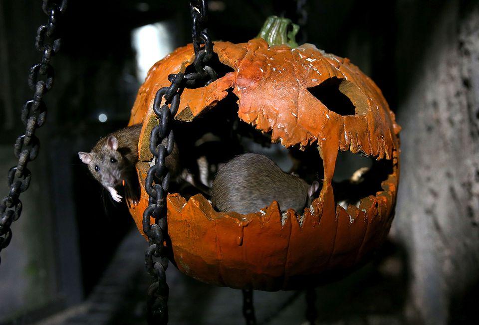 Celebrating Halloween in Europe