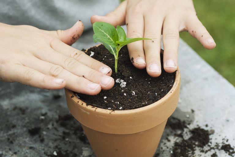 Transplantar plantas
