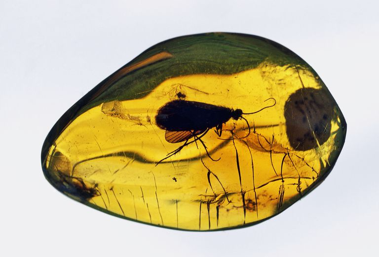 An insect in amber.