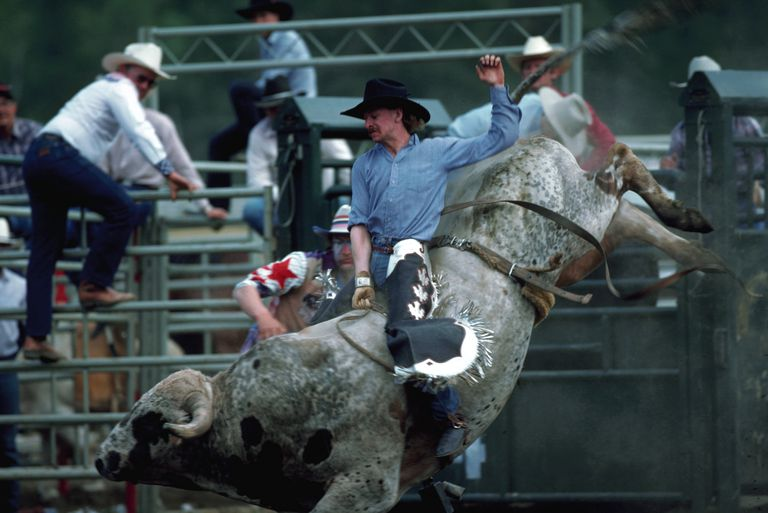 A bull attempts to hurl a cowboy from his back during a rodeo competition.