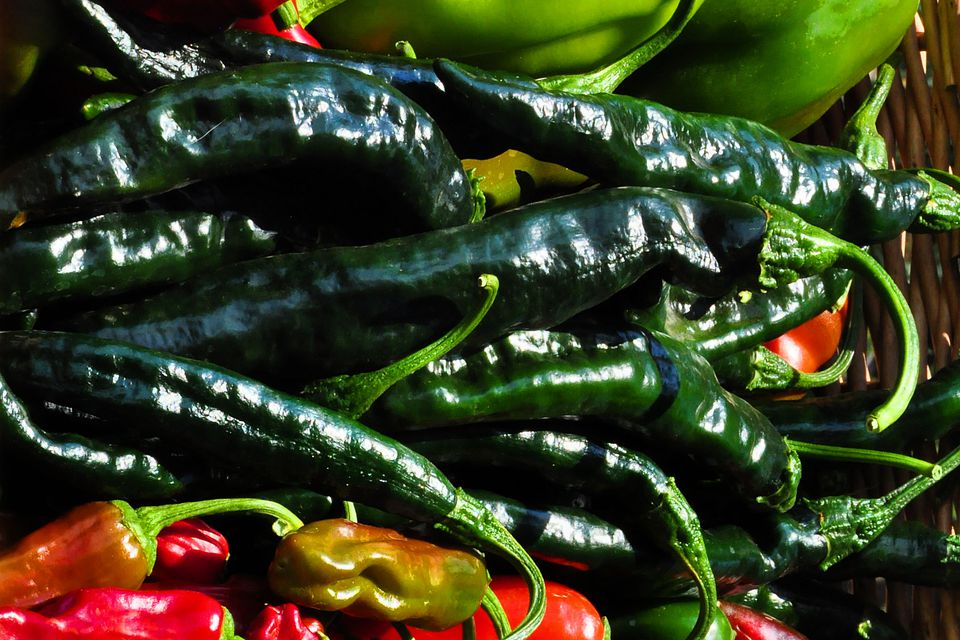 Chilaca Chile Peppers