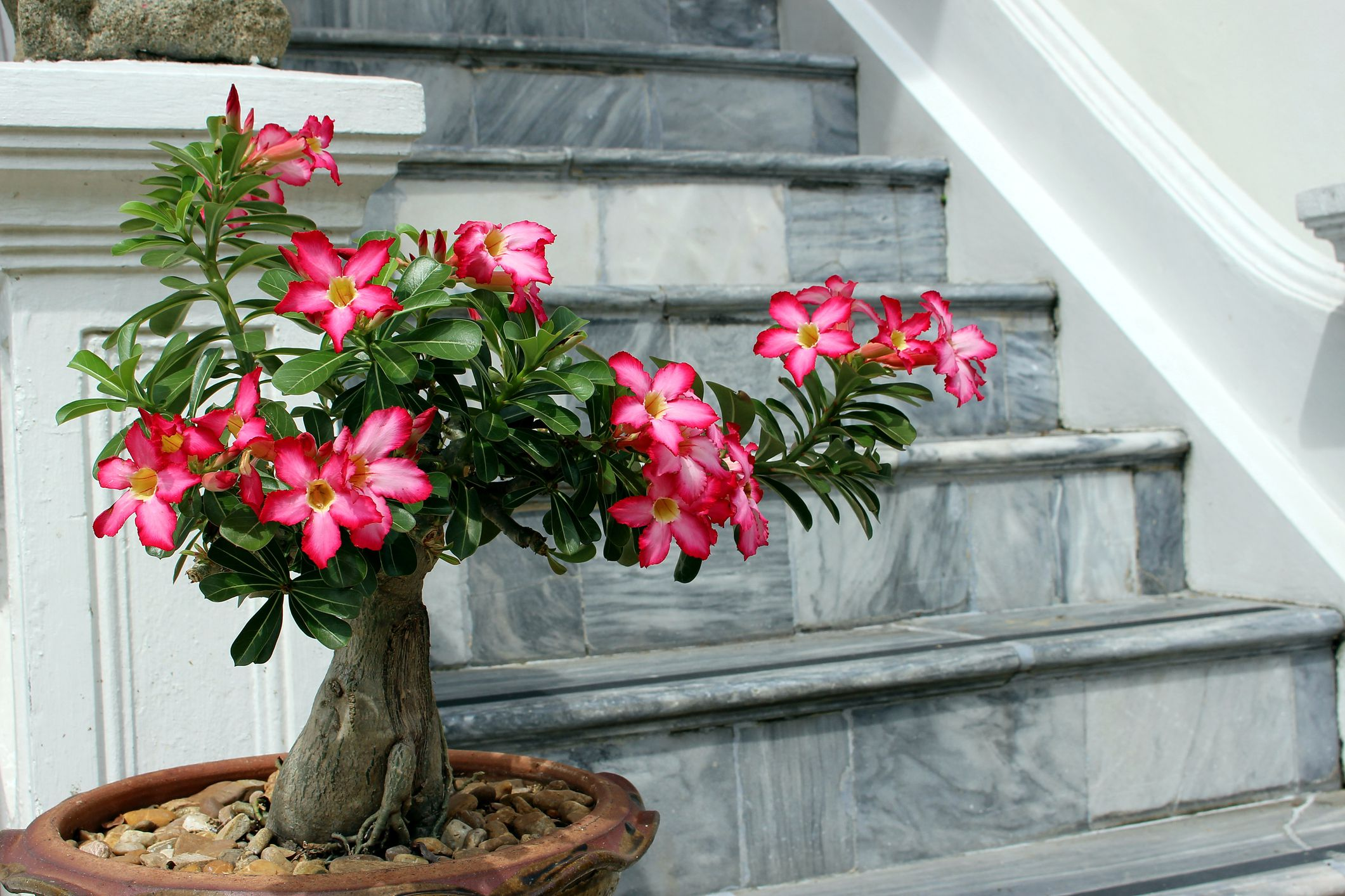 9 unusual houseplants to grow 7 uncommon indoor plants