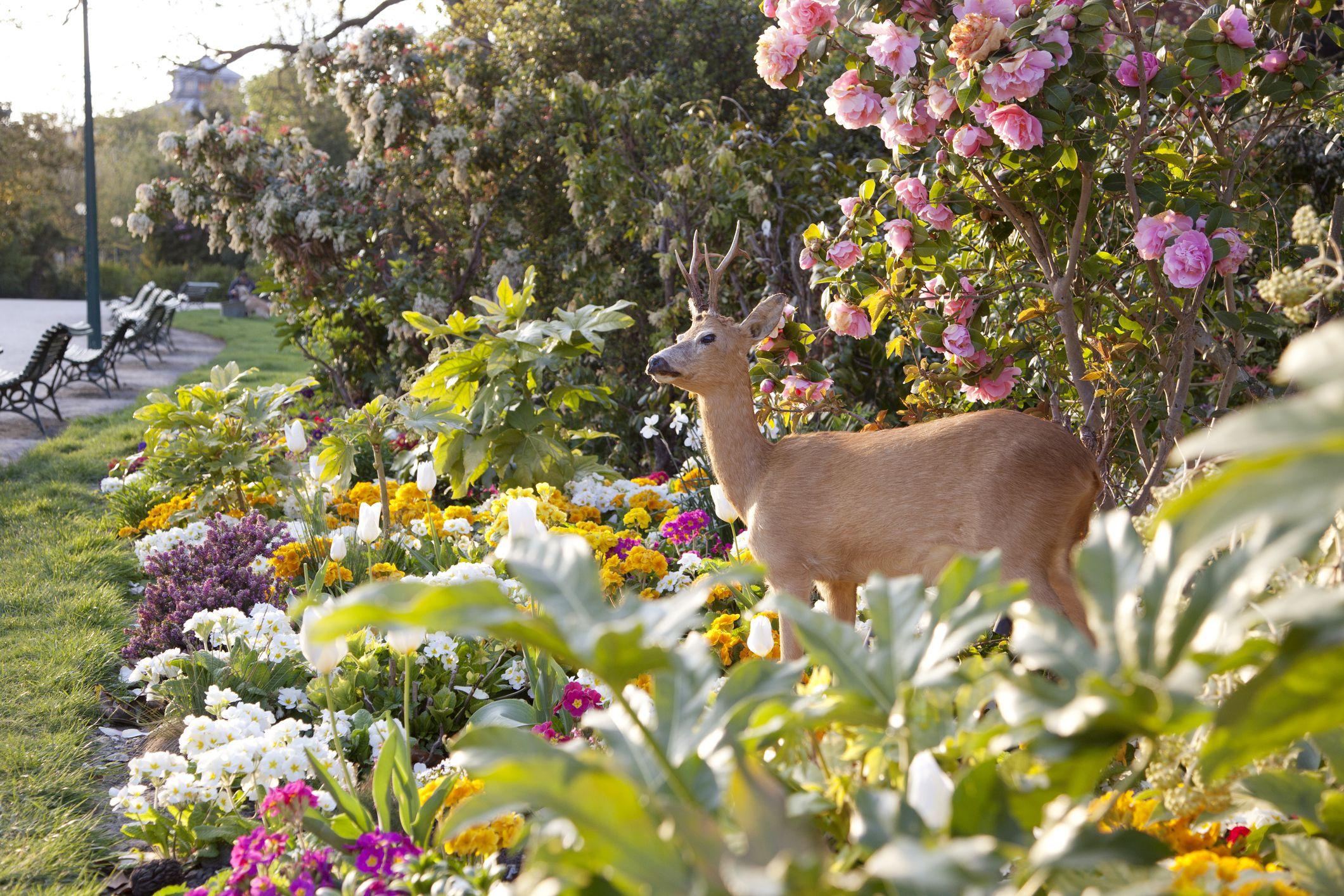 spring blooming bulbs deer wont eat perennial plants - Spring Planting Ideas