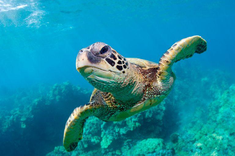 Sea Turtle Printables