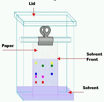 Paper chromatography is used to separate and identify the components of colored mixtures.
