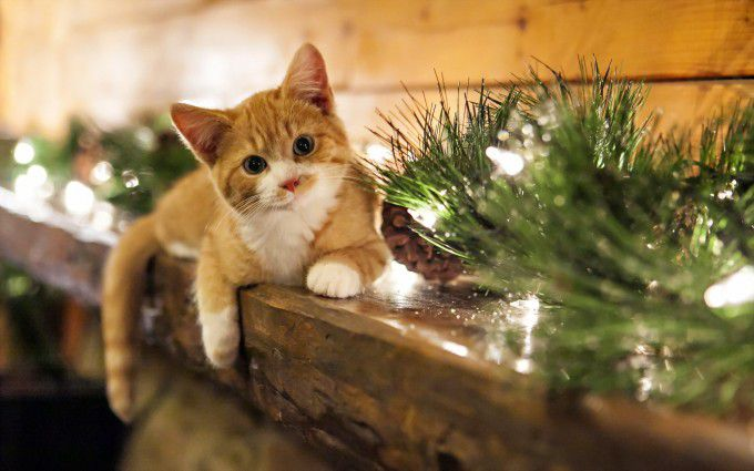 cat on christmas mantel