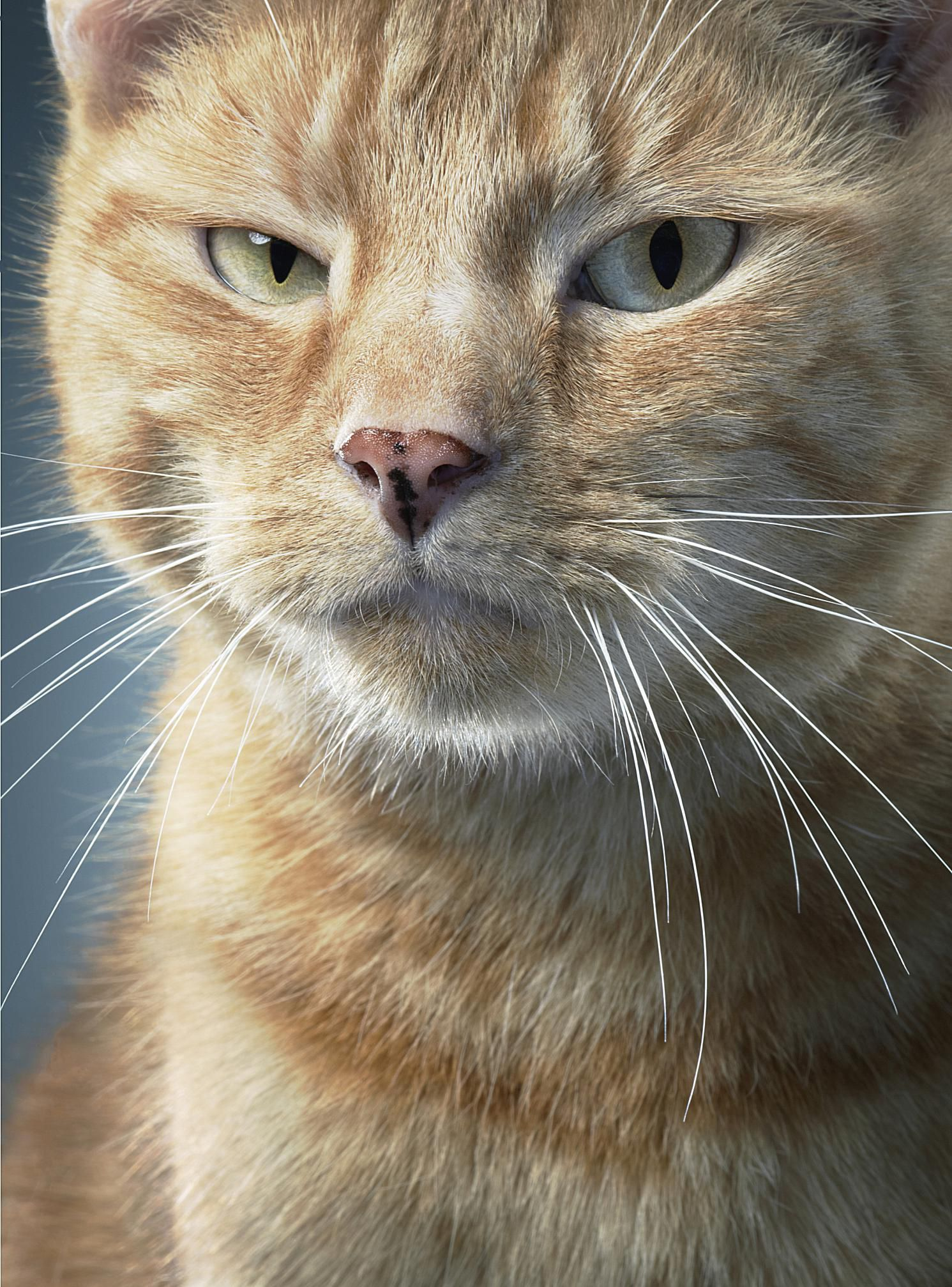 What causes seizures in cats for Can fish have seizures