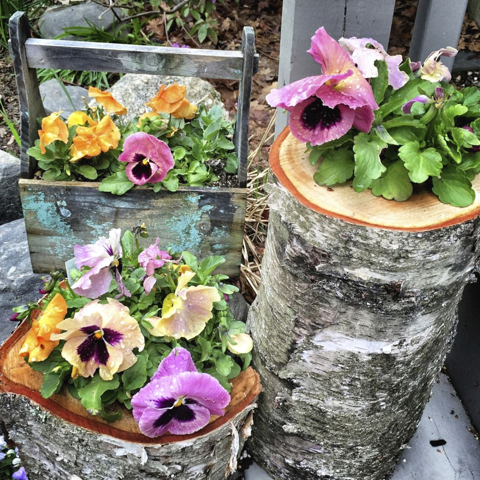 Log Planters with Pansies