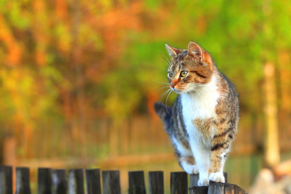 Instinct Cat Food Phosphorus