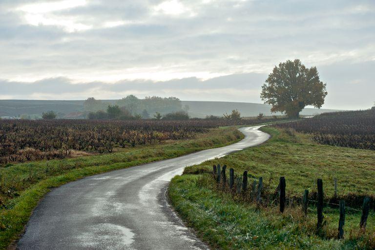 Vineyard at Lantignié of Rhône department in eastern France