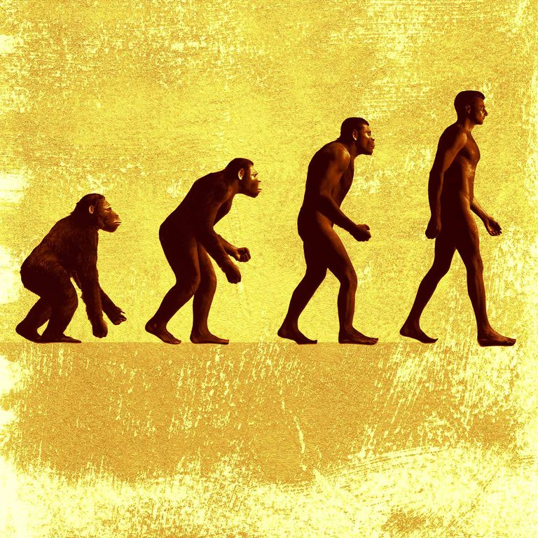 Evolution-Hominid-Progress-1500x.jpg