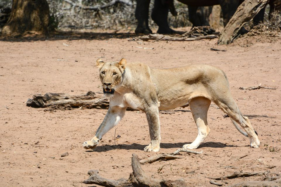 Self-Drive Safaris South Africa's Mkhuze Game Reserve