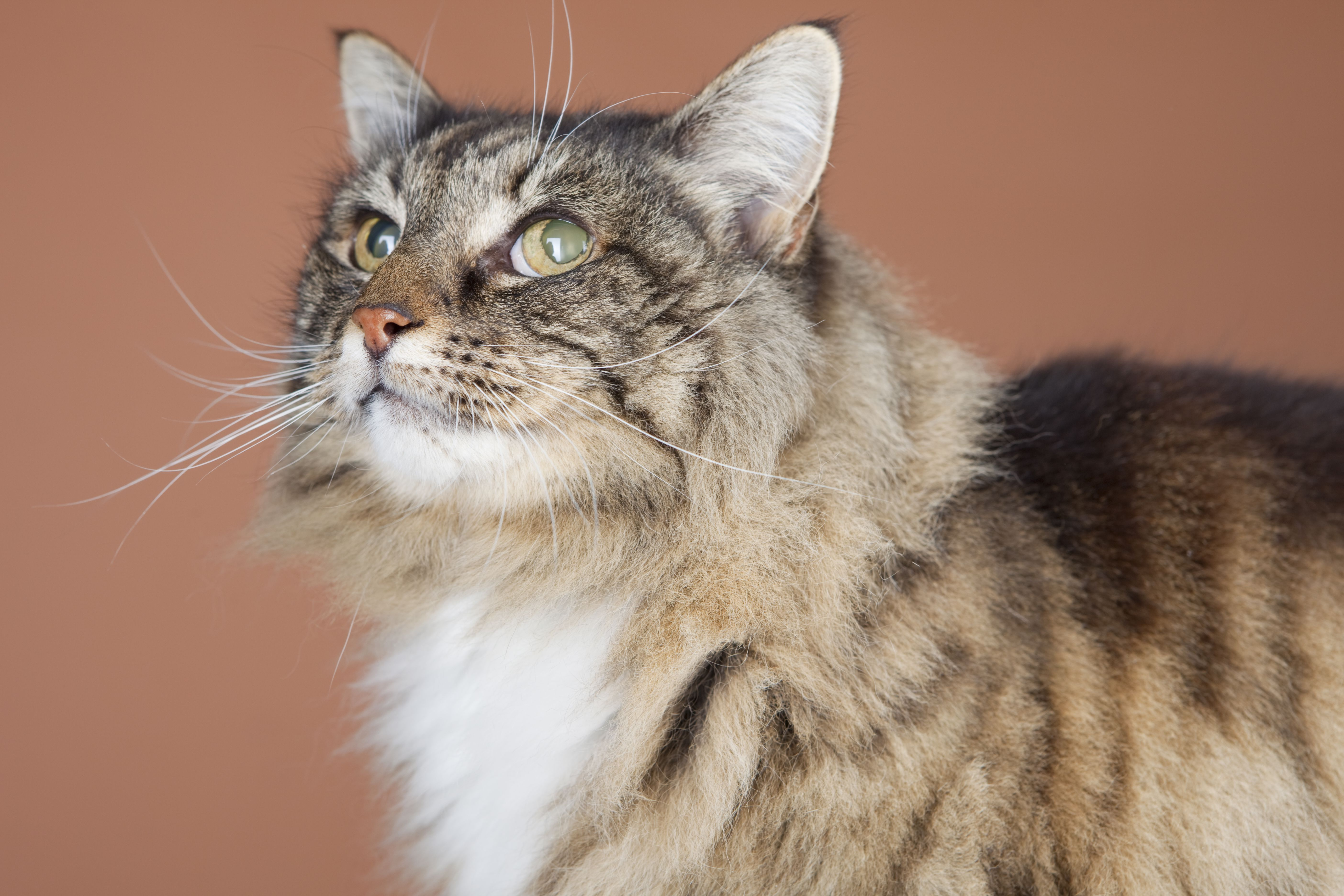 New additions to the cat to human age chart geenschuldenfo Images
