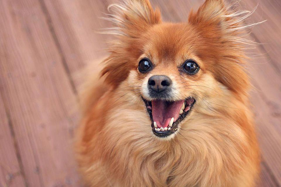 Happy dog portrait shot outdoors.