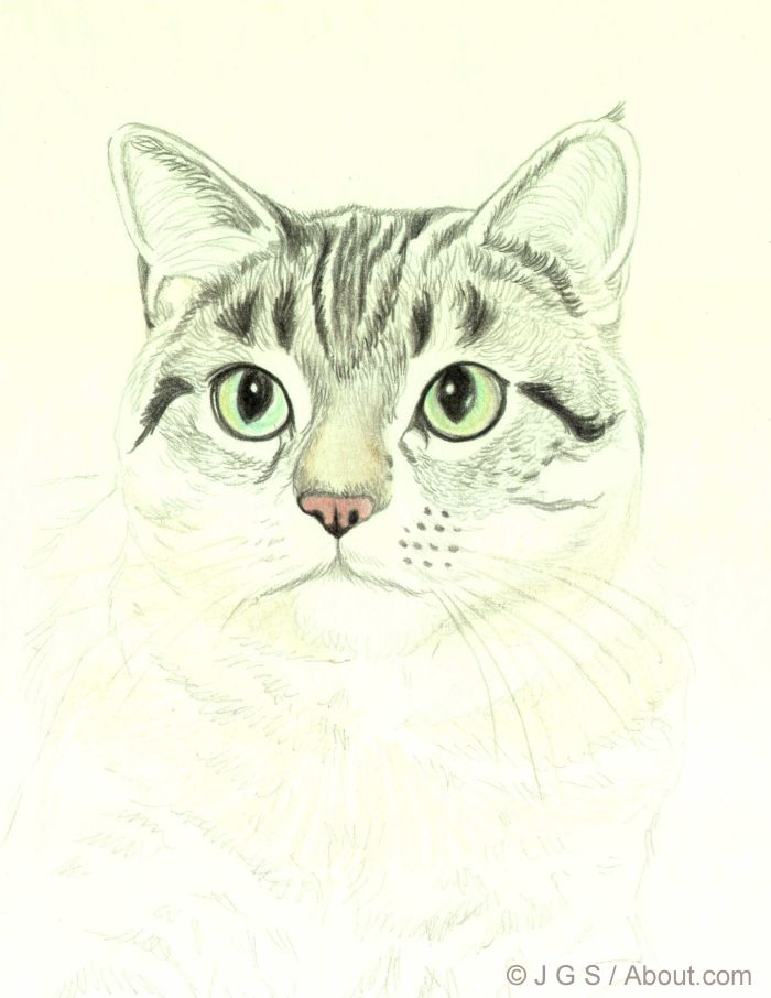 Cat Whiskers Drawing