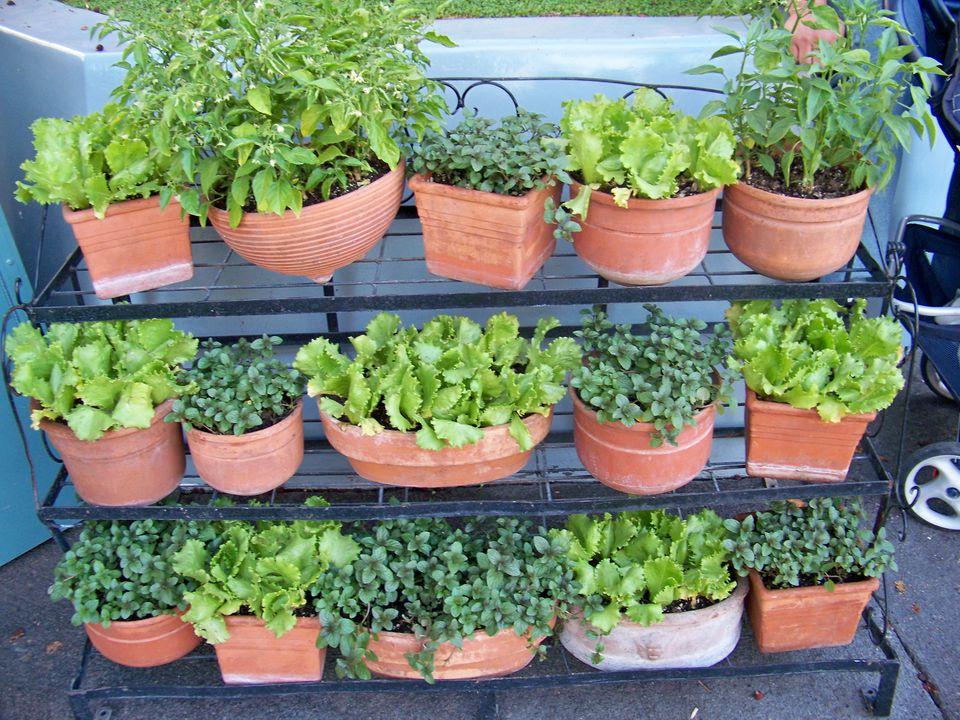 10 Creative Vegetable Garden Ideas on Outdoor Vegetable Garden Ideas id=88714