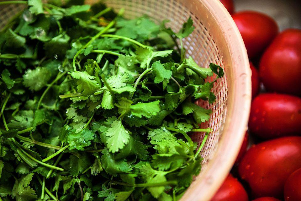 Freshly washed cilantro