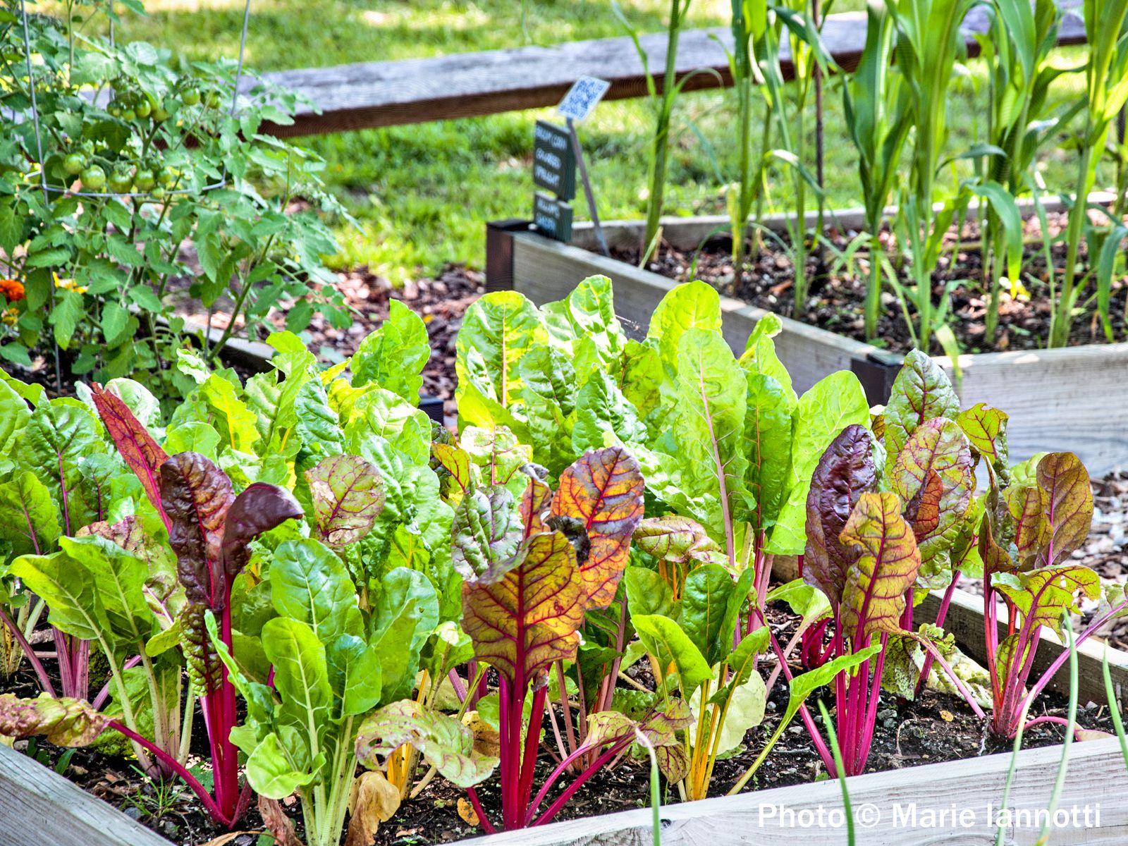 A Long Producing Vegetable Garden
