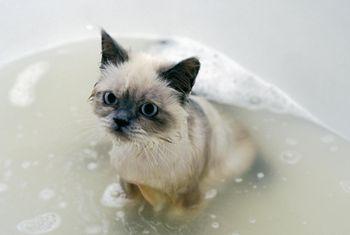 treating uti in cats