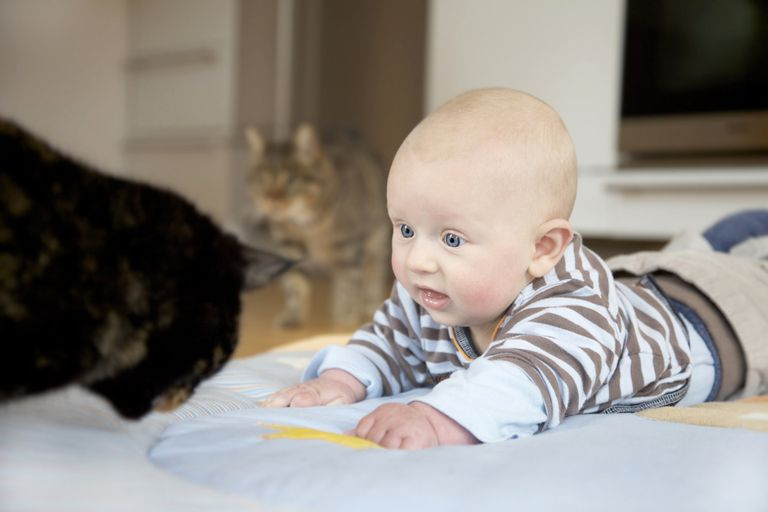 Baby and two cats