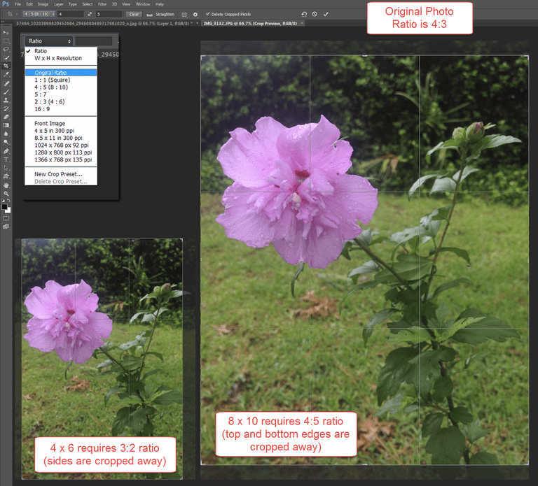 Cropping for Common Print Sizes in Photoshop