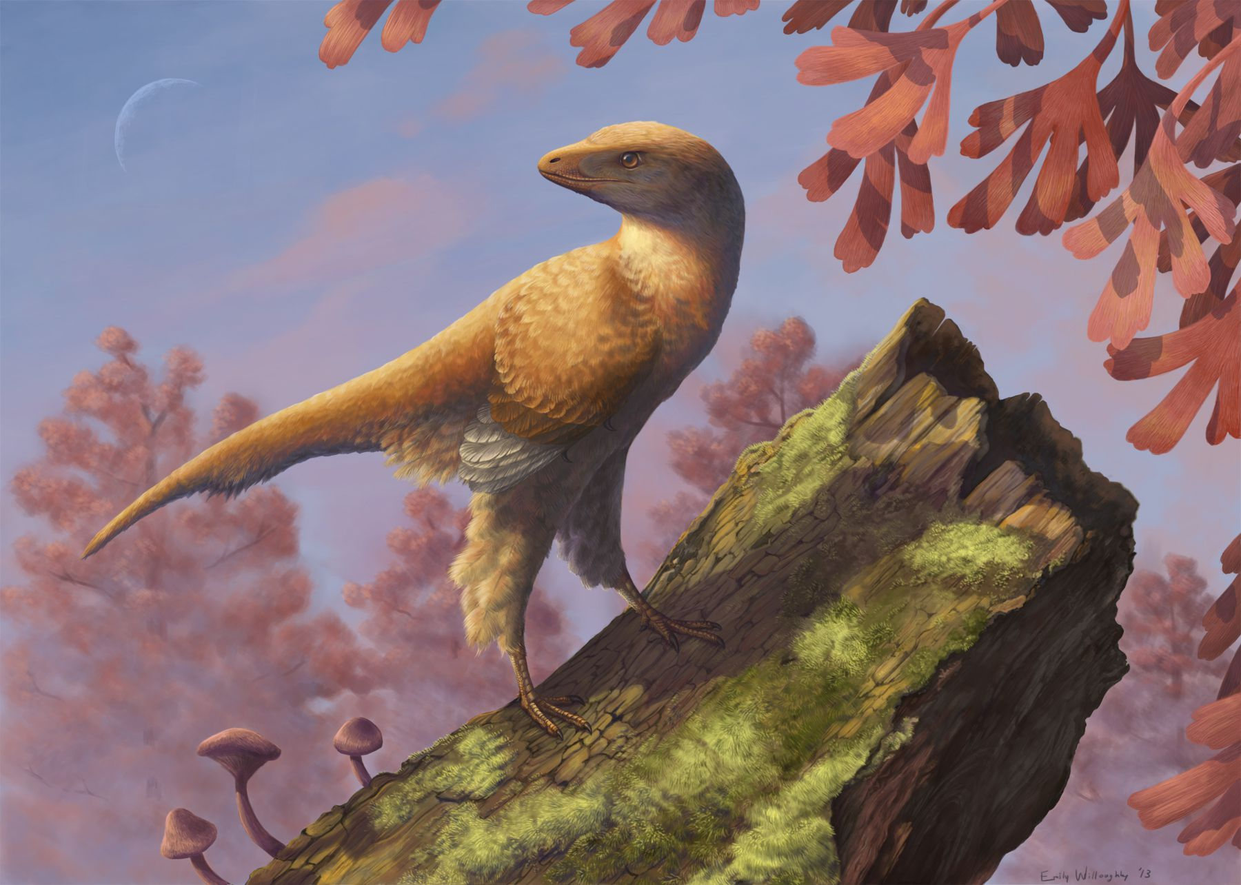 Feathered dinosaurs birds