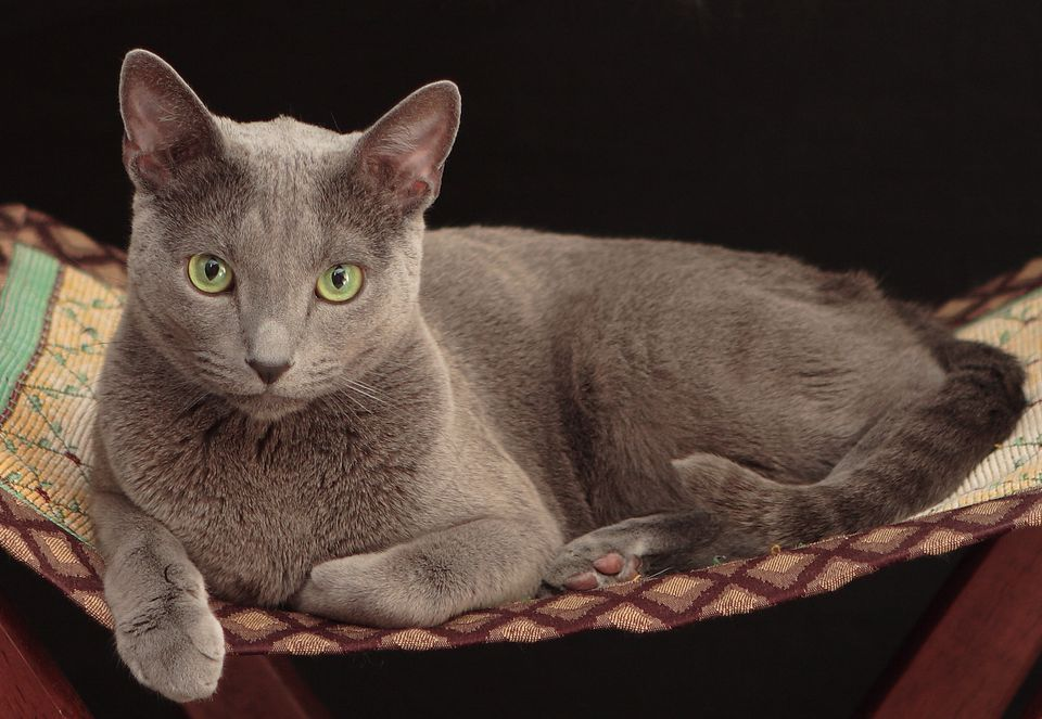 Best Cat Breeds For First Time Owners Uk