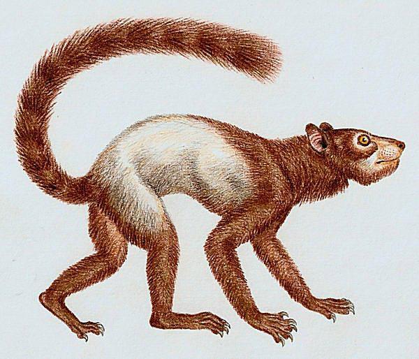 primate evolution