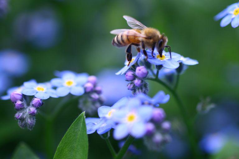 Honeybee_1500