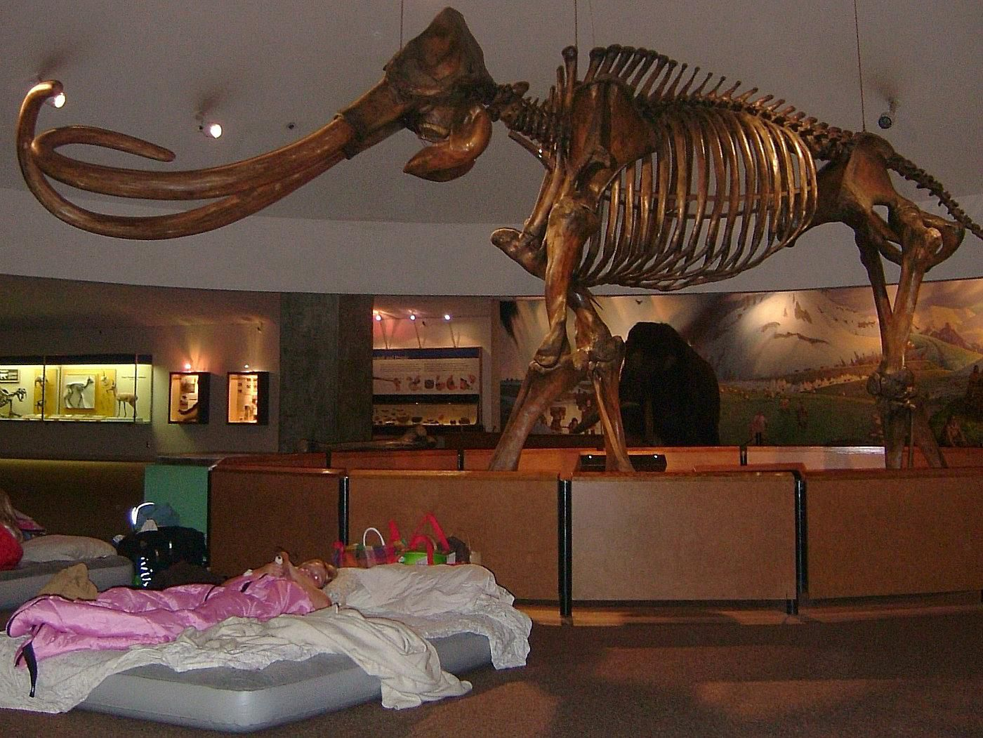 Foyer Museum Zoo : Spend a night at the museum zoo or aquarium