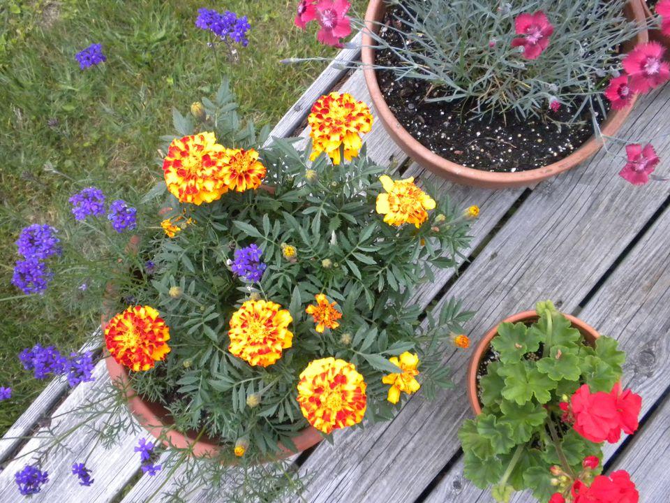 Garden on deck