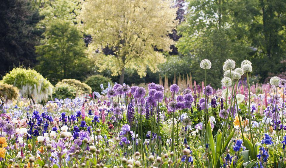Spring Bulbs in Bloom