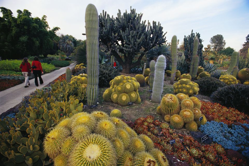 Cacti Garden at Huntington Gardens