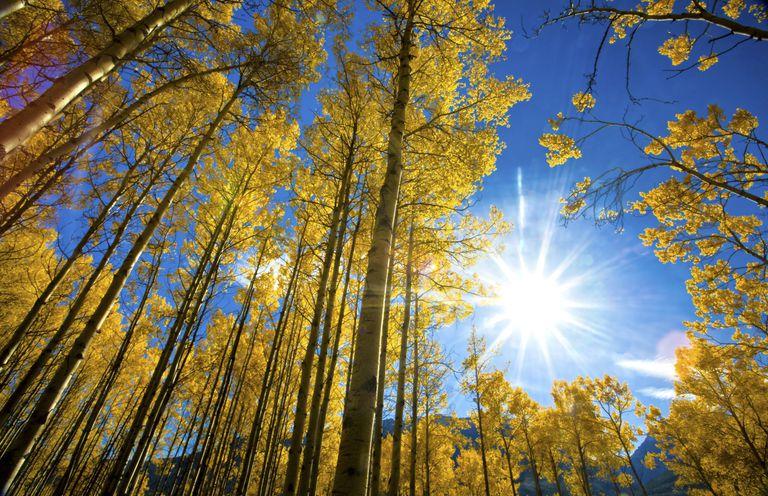 blue-sky-foliage.jpg