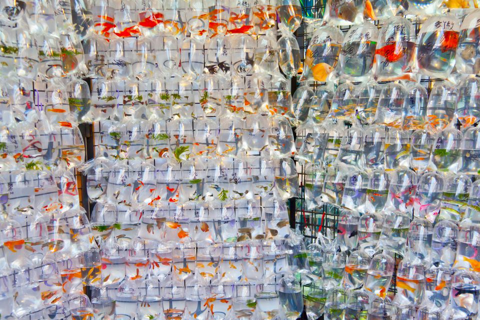 Pet fishes ready on go in Goldfish market in Hong Kong.