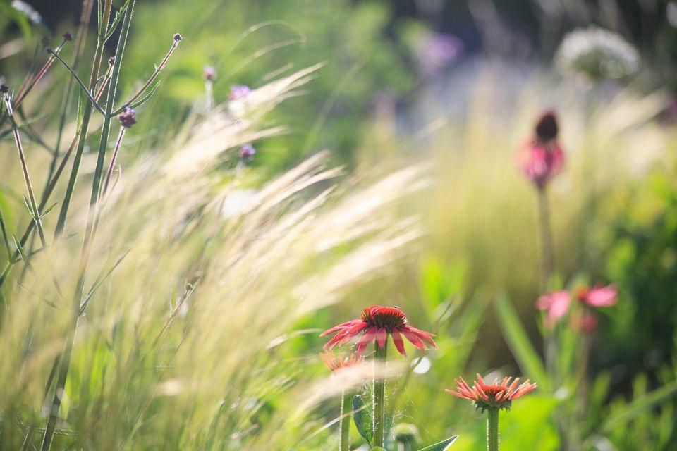 Good Air Circulation in the Garden