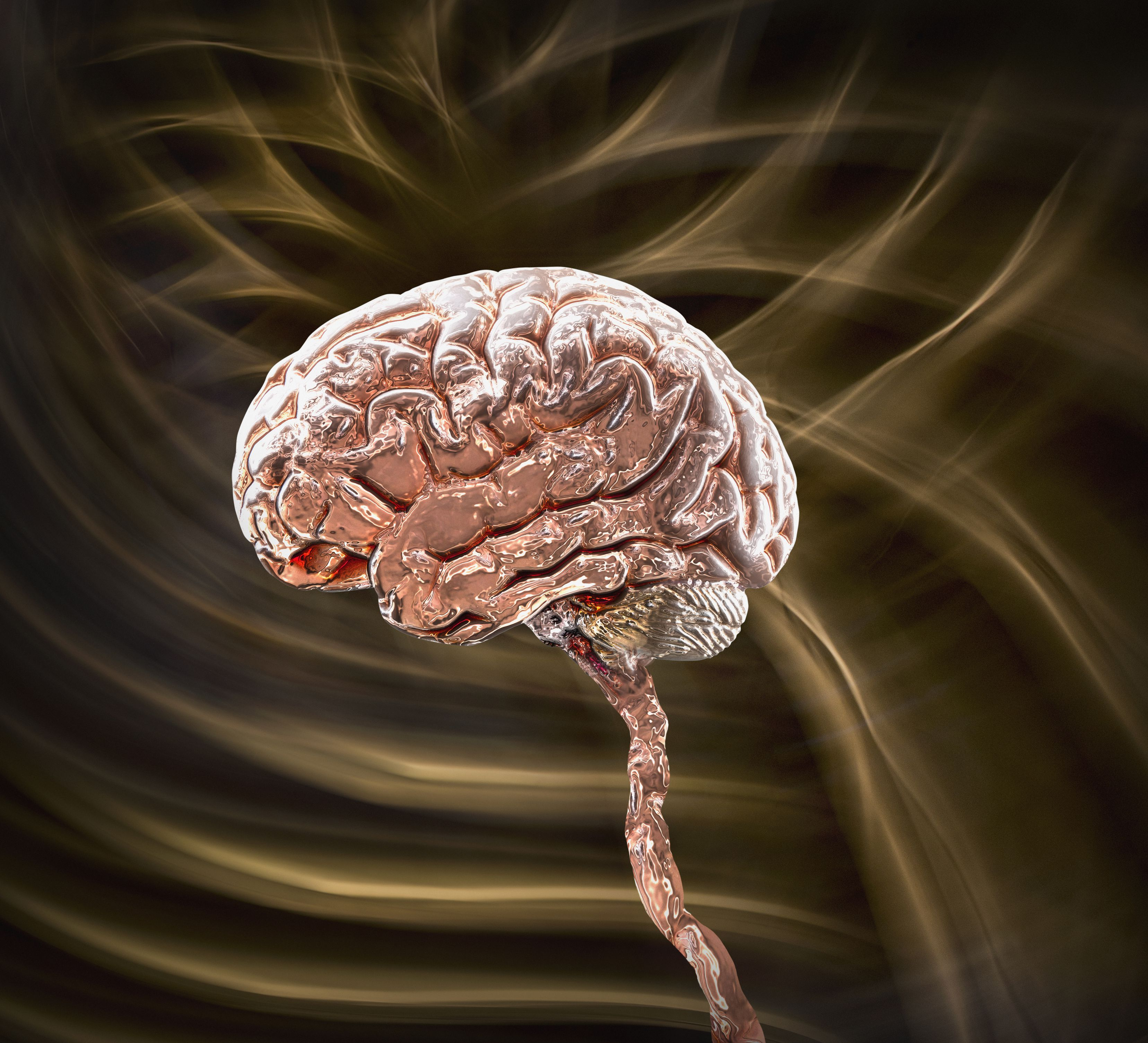 what is the central nervous system