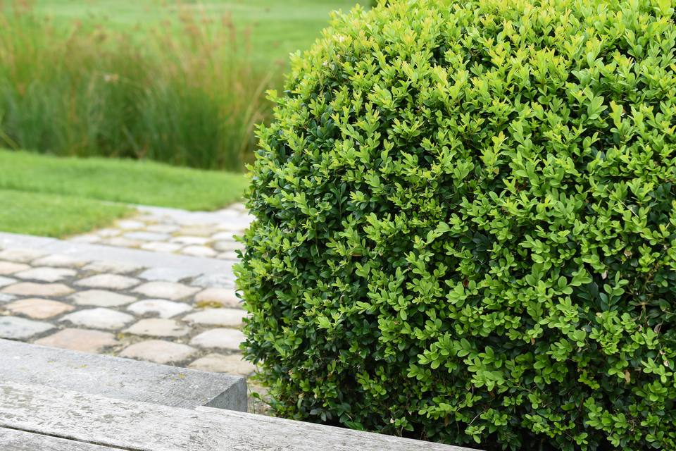 10 Deer Resistant Shrubs for Landscaping