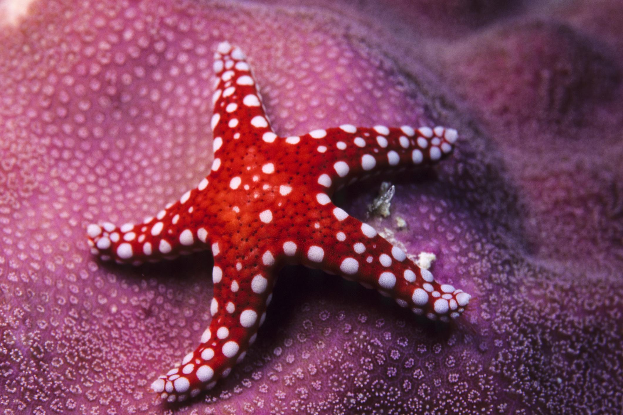 sea star eyes how do starfish see